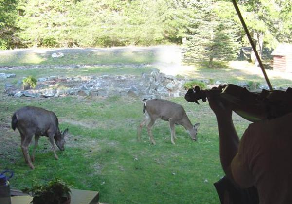 Violinist playing in the shadows as two deer graze in the yard