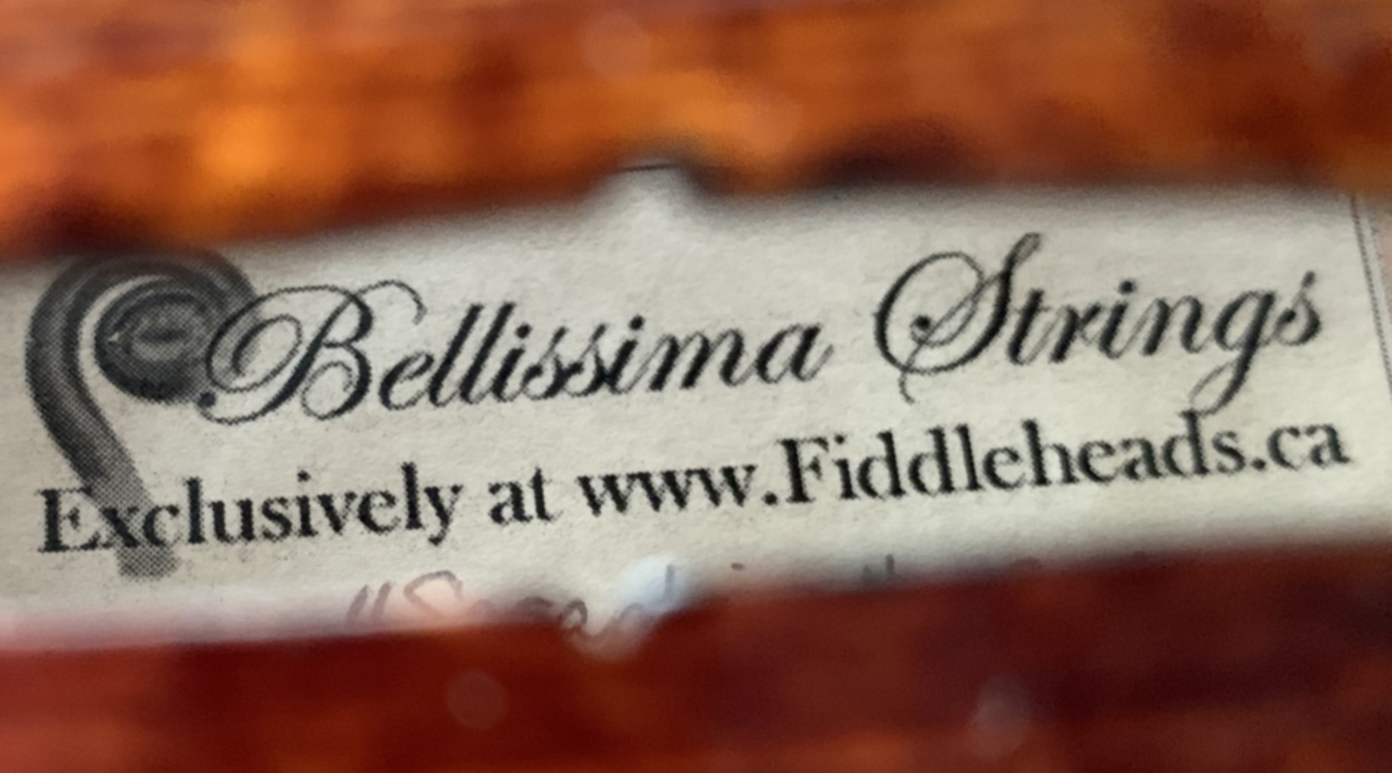 Bellissima - Fiddleheads Exclusive