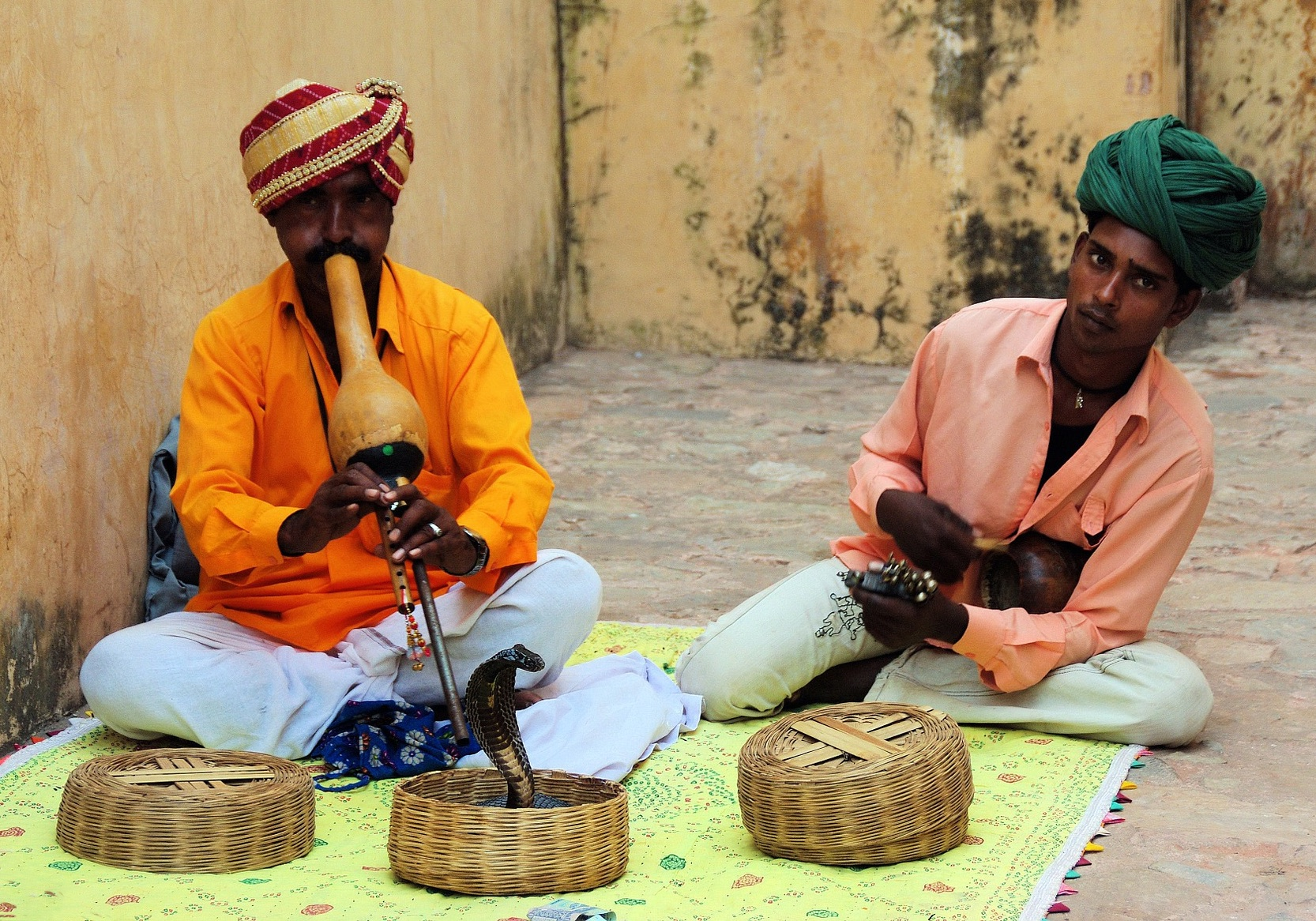 snake charmers and a snake